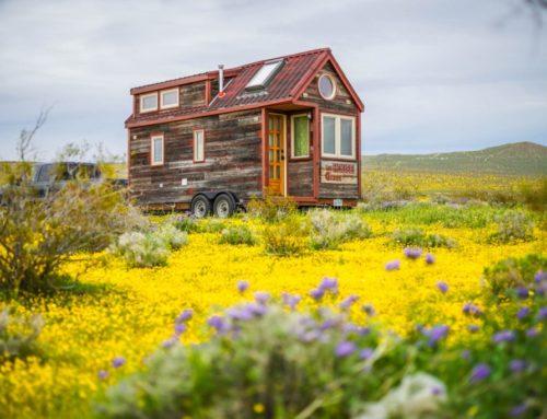 Spring Photos of Tumbleweeds Across the USA